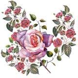 Roses de bouquet d'aquarelle sur un fond blanc Modèle pour le gesign Photo stock