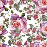 Roses de bouquet d'aquarelle sur un fond blanc Modèle sans couture pour le gesign Photographie stock libre de droits