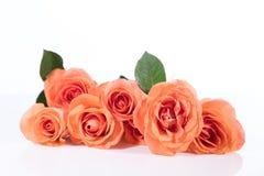 Roses de bouquet devant le blanc Photos libres de droits