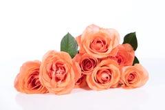 Roses de bouquet devant le blanc Photos stock