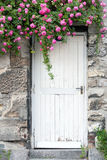 Roses de cascade sur un mur de jardin à Paris, France Photos stock