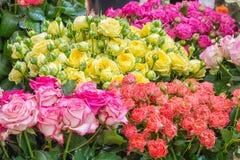Roses de différentes couleurs à vendre au magasin de fleur néerlandais Photographie stock