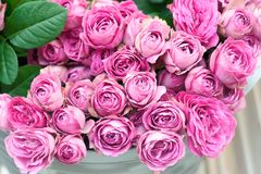 roses roses de fleurs Image libre de droits