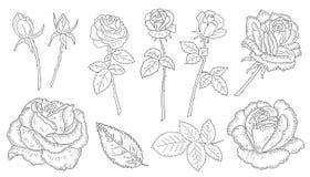 Roses de fleurs réglées Image stock