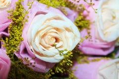 Roses de floraison Photographie stock libre de droits