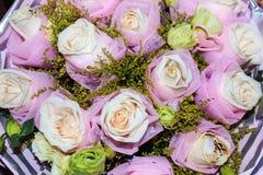 Roses de floraison Image libre de droits