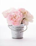Roses de floraison dans le vase Image stock
