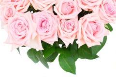 Roses de floraison roses Photographie stock
