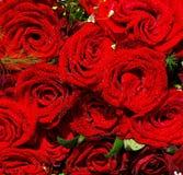 Roses de fond Photos libres de droits