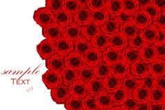 roses de fond Photo stock