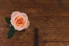 Roses de fond de Brown Photos stock