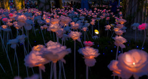 Roses de foudre photo libre de droits