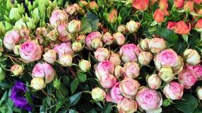 Roses de jardin sur le marché en plein air Photo stock