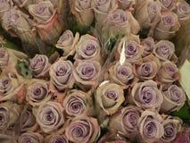 Roses de lavande au marché d'agriculteurs Photos stock