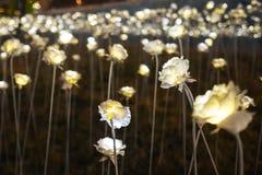 Roses de LED rougeoyant dans l'obscurité avec les roses de tache floue et le fond de bokeh Photo libre de droits