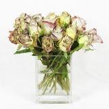 Roses de mort Image stock