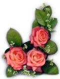 Roses de pêche Image libre de droits