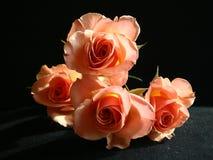 Roses de pêche Image stock