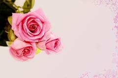 Roses de Rose sur le fond rose Photographie stock