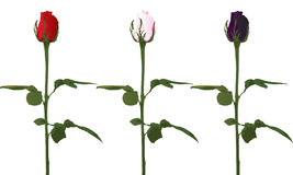 Roses de vecteur Photo stock