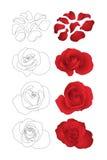 Roses de vecteur réglées Photo stock