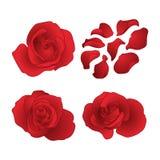Roses de vecteur réglées Photos stock