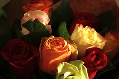 Roses de velours pour mon amour photo stock
