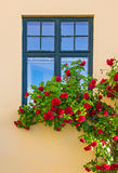 Roses decorating a house Royalty Free Stock Photo