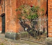 Roses derrière la barrière de fer près du mur de briques rouge Photo libre de droits