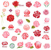 Roses design elements Stock Image