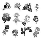 Roses design elements Stock Photography