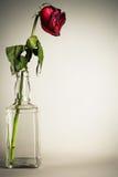 Roses desséchées par vintage photo libre de droits