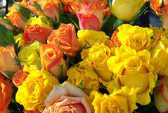 Free Roses Detail Stock Photos - 8350963