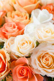 Roses in detail Stock Photo