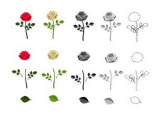 Roses of different colors with elements of flower. Isolated on white background. vector illustration