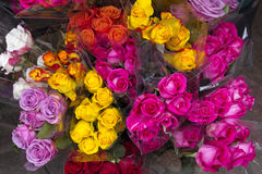 Roses of different colors Stock Images