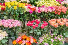 Roses of different colors for sale at Dutch flower store Royalty Free Stock Photos