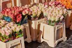 Roses in different colors on a weekly market in Germany royalty free stock image