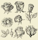 Roses doodles set Stock Photos