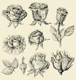 Roses doodles set. Vector set of a beautiful roses Stock Photos