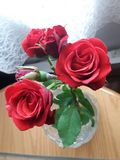 Roses and drape royalty free stock photography