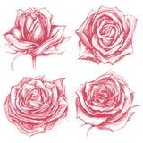 Roses Drawing Set 002 Royalty Free Stock Image