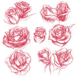 Roses Drawing set 001. Roses traditional drawing line work vector for Use set 001 Stock Photo