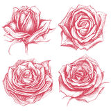 Roses Drawing set 002. Roses traditional drawing line work vector for Use set 002 Royalty Free Stock Image