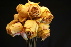 Roses dried Royalty Free Stock Photo