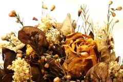 Roses Dried Stock Photos