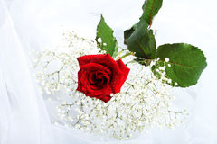 Roses with drops Royalty Free Stock Image