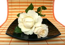 Roses with drops. White roses with drops of a rain on striped Royalty Free Stock Image