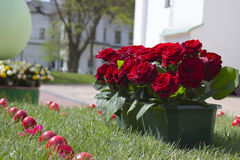 Roses and Easter eggs Stock Images