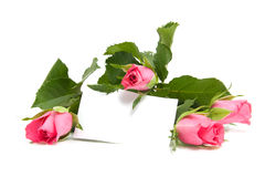 Roses and empty card Stock Image